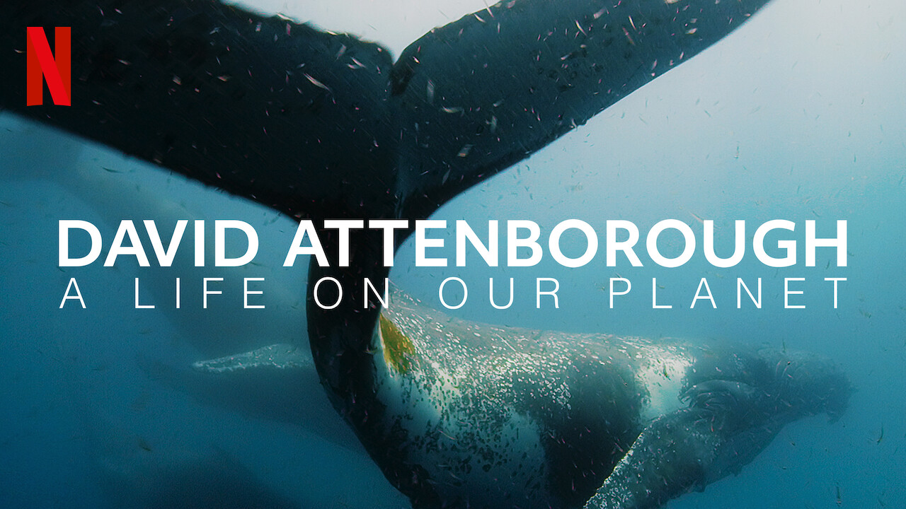 Blue Whale swimming under sea with DAVID ATTENBOROUGH: A LIFE ON OUR PLANT